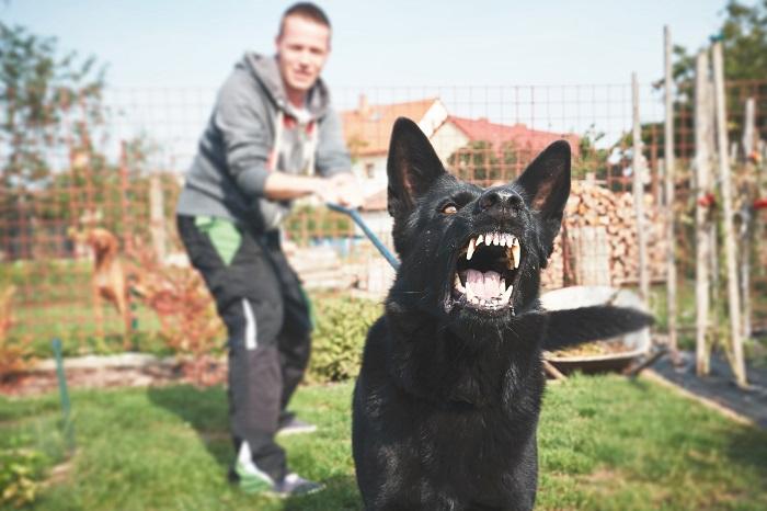 Columbus dog bite lawyer